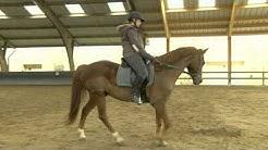Montigny-le-Bretonneux : vers une réhabilitation du poney-club