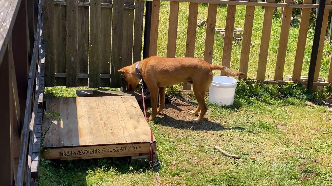 考えながら穴を掘る犬