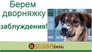 дворняжка  заблуждения при выборе собаки  Дворнядка метис неожиданности