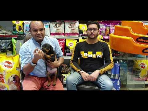 #Poorquality #Rottweilerpup #Disturbed Temperament beware of frauds by Baadal Bhandaari Pathankot