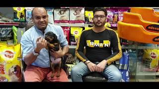 #Poorquality #Rottweilerpup #DisturbedTemperament #beware of frauds  #Baadal Bhandaari Pathankot