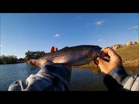 Rainbow Trout Fishing In Kansas