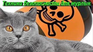 ТЕХНИКА БЕЗОПАСНОСТИ ДЛЯ МУРЛЫК  SAFETY FOR CATS