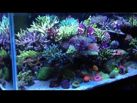 how to set up a clownfish tank
