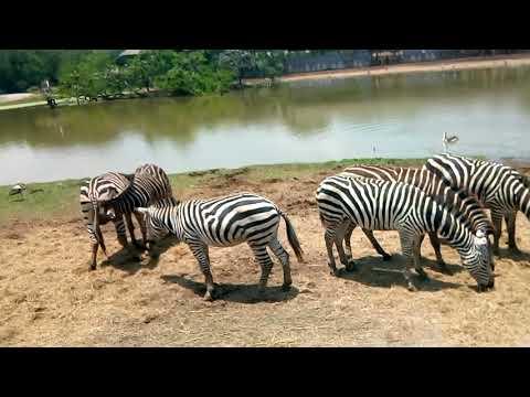 Safari world II Bangkok, Thailand