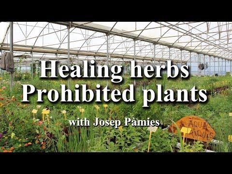 Healing Herbs, Prohibited Plants (English subtitles)