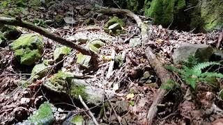 산길을 간다 바위밑 뭔가?무서운 느낌은ㆍ깊은골 입구의  특이한 형상?