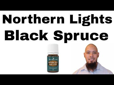 northern-lights-black-spruce-short-review