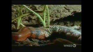 Самые ужасные змеи на планете Земля  Змеи   документальный фильм 2 The most terrible snakes on the p