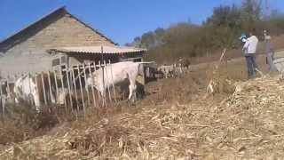 Как мы ездили в гости на ферму. Миниферма. Фермер-женщина(Продолжение: Интервью ч.1. Доходы и затраты фермера https://youtu.be/1_V1kai0HRE Интервью ч.2. От чего зависит успех. Заним..., 2015-11-20T21:56:50.000Z)
