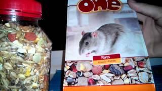 Как и чем кормить грызунов домашних крыс?