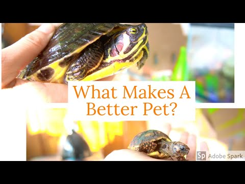 Turtles Vs. Tortoises (Similarities & Differences)