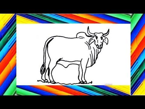 Como Dibujar Un Toro Paso A Paso How To Draw A Bull Youtube