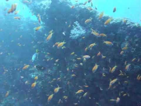 20091016 10 Different Dives Paradise Island, Maldives