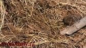 валерий медведев приготовления земли для рассады