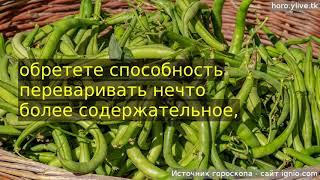 видео Стрелец, Кулинарный гороскоп