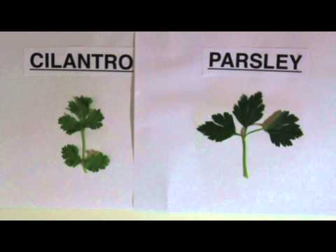 How to say parsley leaves in spanish