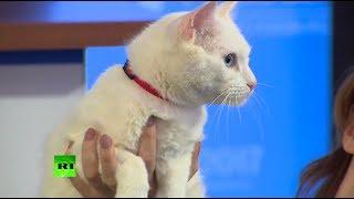 Усатый Нострадамус: в Санкт-Петербурге представили кота-предсказателя Кубка конфедераций