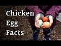 Farm Fresh Chicken Egg Facts