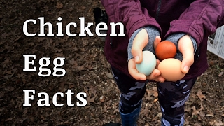 Farm Fresh Chicken Egg Facts