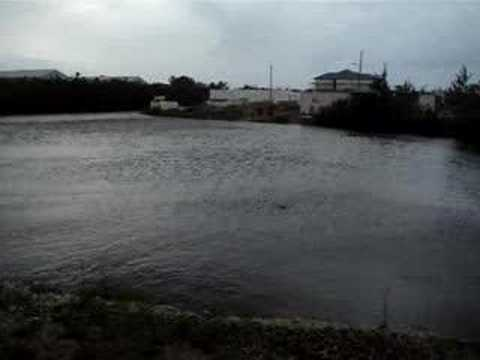 The Lake behind Cayman Apartment