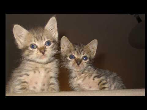 Cute Kittens Growing Up