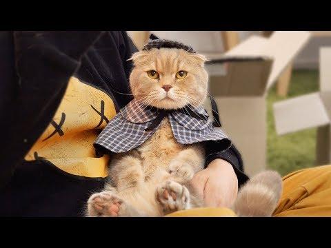 탐정 고양이 셜록 이즈가 되었어요 수리노을가족 패션쇼!