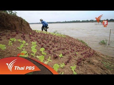 ความกังวลใจเกษตรริมโขง อ.เขมราฐ จ.อุบลราชธานี - วันที่ 13 Dec 2017