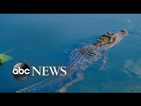 A woman in South Florida was killed in an alligator attack