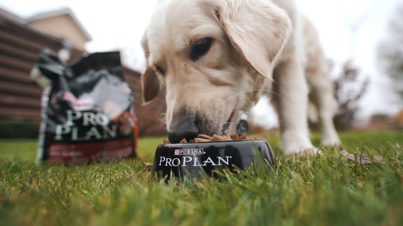 Чем и как правильно кормить собаку: советы ветеринара