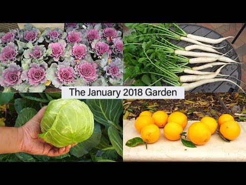 Monthly Garden Series - January 2018 Garden - Harvests, Tour & More!