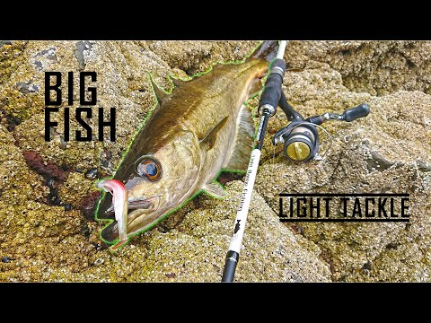 Lure Fishing | EPIC LRF Session- Mackerel, Coal Fish, Cod And Pollack