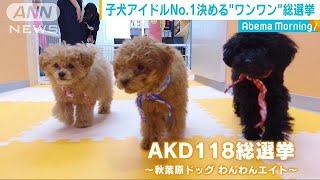 子犬NO.1は?「AKD118(ワンワンエイト)総選挙」(19/05/10)
