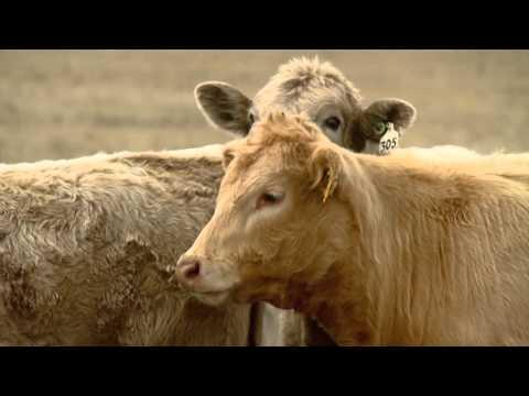 4/23/2016 U.S. Farm Report