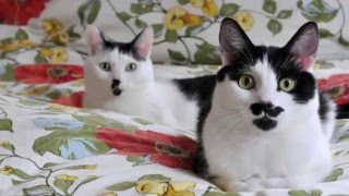 Как у кошек появляются пятна?