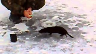 Прикол на рыбалке  Рыбинспектор животное