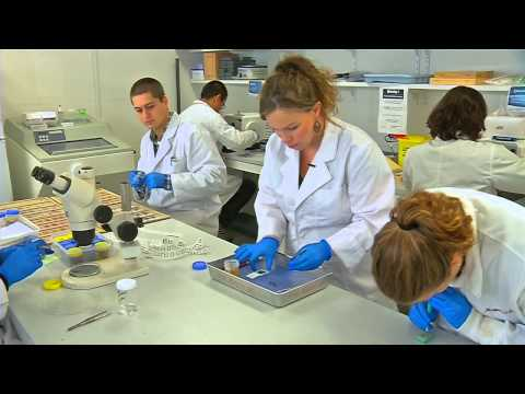 Fish Health Laboratory