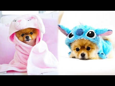 Baby Dogs - Cute and Funny Dog Videos Compilation #19 | Aww Animals