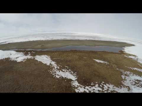Chukchi Sea, June 2016