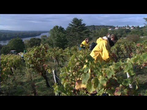 Vues sur Loire : Les vins de Loire