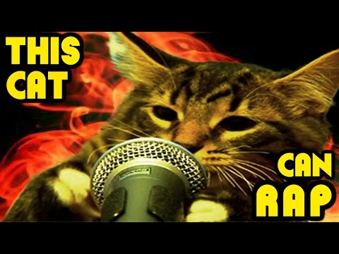 This Cat Can Rap - THE RAPPING CATS