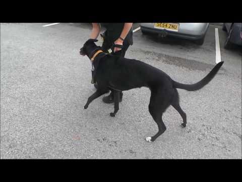 Dogs Trust Manchester - Robbie