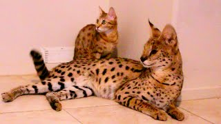 TOP EXOTIC PETS YOU CAN OWN!