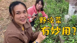 rural life with Laofei :  picking wild vegetable and sweeping the tomb on Qingming festival