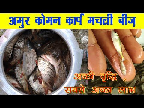 Amur Carp | Amur Fish Seed |Amur Fish Call For Booking 9836491854
