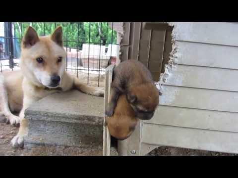 子犬が落ちた!