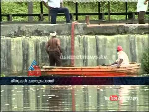Fishes diesin action of leaked chemical from Ernakulam FACT:FIR 21st October 2011