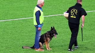 NIAK 2017 Henk van der Sluis WINDSOR VON DER SCHIFFSLACHE Protection 92P