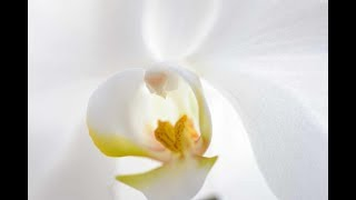 グラジオラス、ユリ、胡蝶蘭 、シャガなどの花々と雪が降った高知工科大...