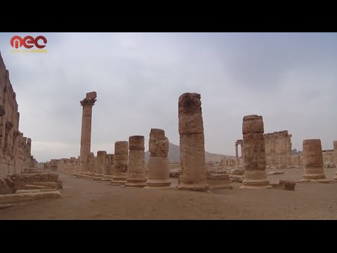 Field Updates in Palmyra